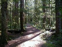 Campbell River Forest