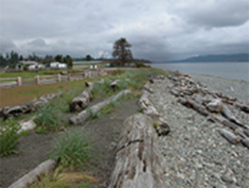 Soft shore rehabilitation at Dick Murphy Park: